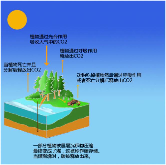煤是一种化石燃料,所以烧煤产生的CO2排放量较高.png